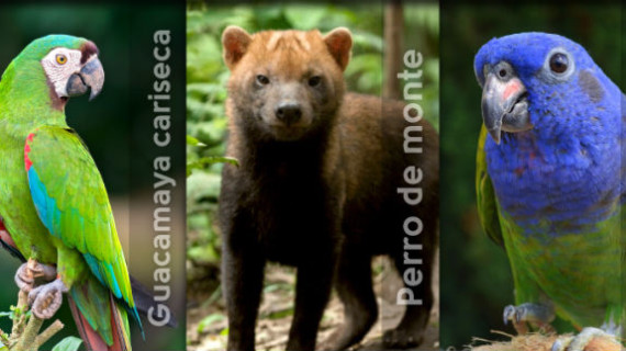 Dagma liberará fauna silvestre en Los Farallones