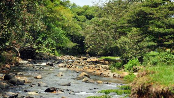 Se invita a ahorrar agua, tras disminución de caudales de los ríos