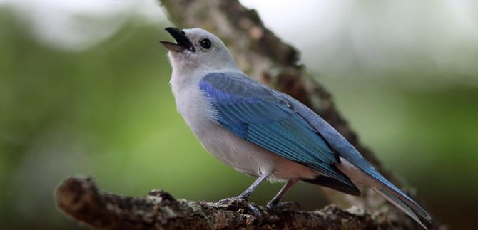 Colombia, primero en evento mundial de especies de aves