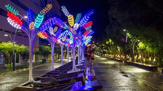 Cali 24 Horas brillará con las luces de la navidad