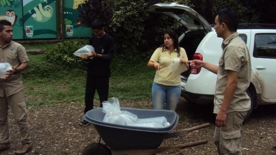 Peces exóticos y amazónicos fueron trasladados al zoológico de Cali