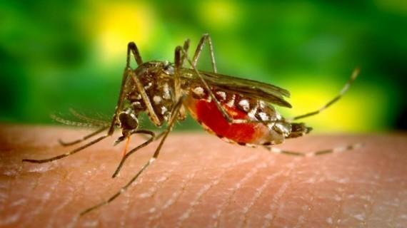 Reconocen aportes del Valle del Cauca en estudio sobre zika realizado por Colombia para el mundo
