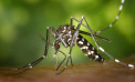 Incremento de casos de dengue en el Valle preocupa a las autoridades de salud