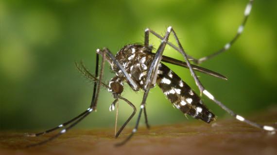 Investigadores de Latinoamérica debaten en Cali sobre enfermedades tropicales
