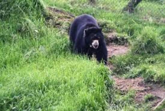 proteccion del oso