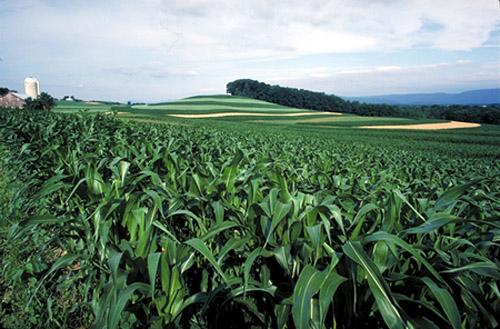 Secretaría de Agricultura inicia balance de año con evaluaciones agropecuarias