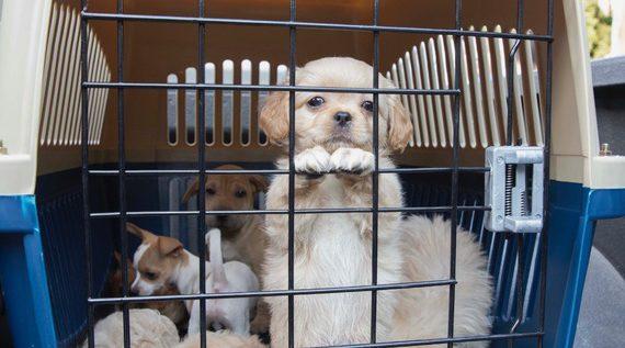 Mascotas decomisadas en diciembre podrán ser adoptadas