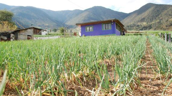 Valle del Cauca no presenta tendencia al alza de alimentos de la canasta familiar