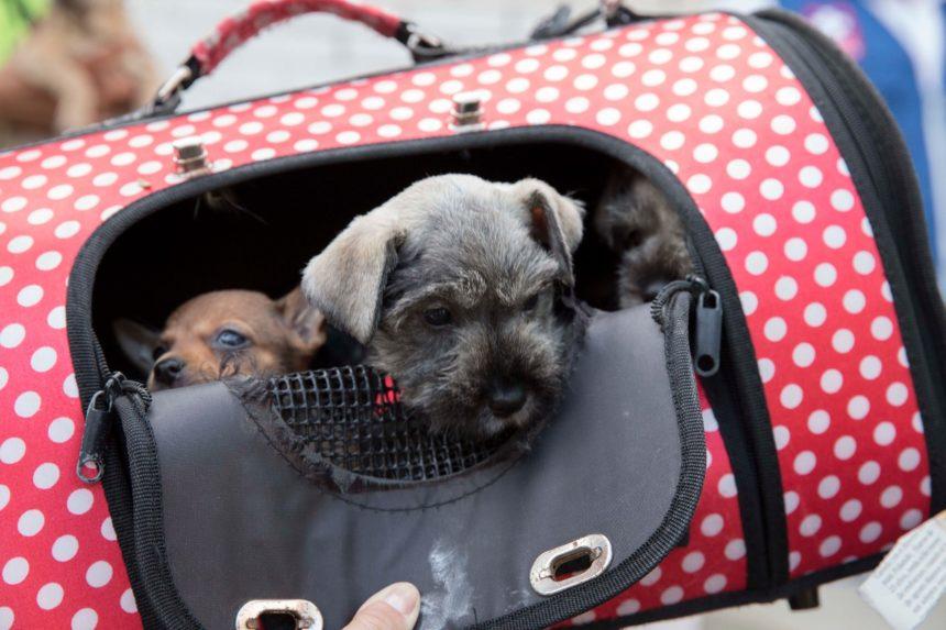 La venta ilegal de cachorros compromete su salud y bienestar