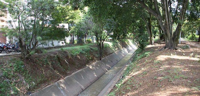 Se retiran árboles caídos sobre el río Cañaveralejo