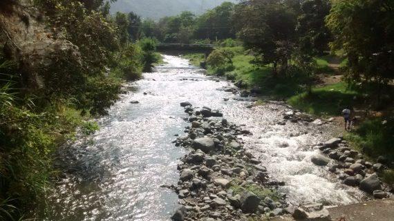 Inicia segunda etapa de reforestación de cuencas en municipios del Valle