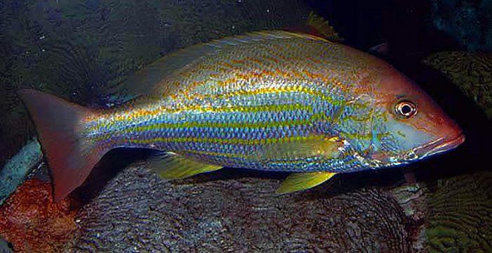 Golfo de Salamanca, uno de los más ricos en diversidad de peces