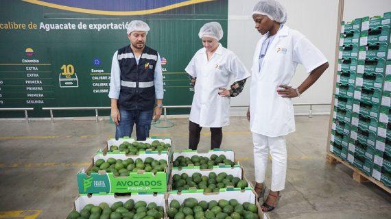 Agro vallecaucano espera superar los 100 millones de dólares en exportaciones en 2018