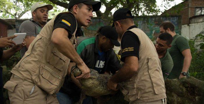 Más de 190 animales de Villa Lorena fueron liberadas en Antioquia y Cesar