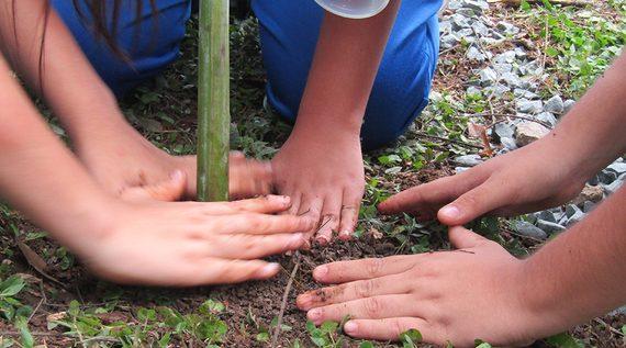 Integrantes de los semilleros de cultura ciudadana para la paz aprenden de la naturaleza