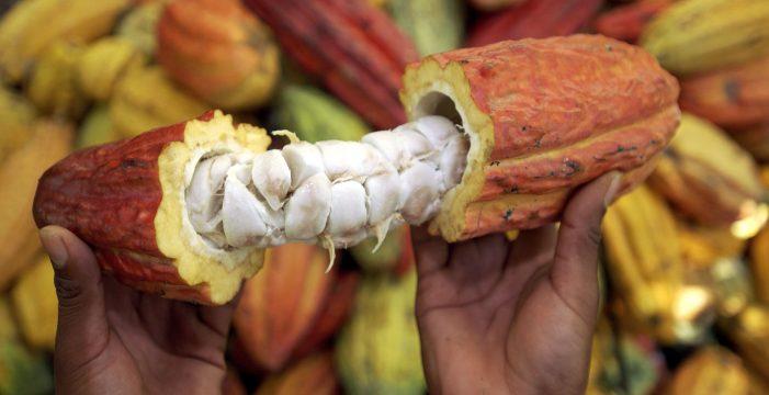 200 familias beneficiadas con proyecto de cacao en Buenaventura