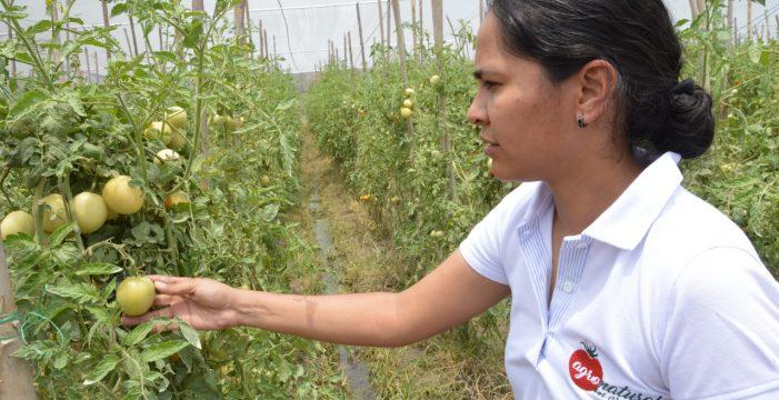Empieza evaluación agropecuaria para identificar las hectáreas sembradas en el departamento
