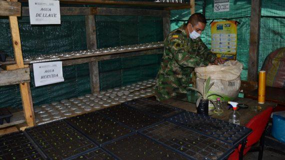 Gobernadora reconoce labor del Batallón de Alta Montaña por siembra de frailejón