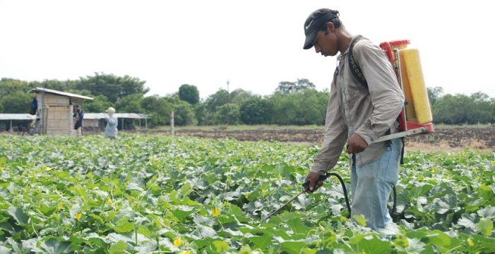 Secretaria de Agricultura del Valle inició capacitaciones para el buen uso de plaguicidas