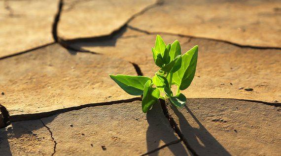 Dagma recomienda evitar siembras en temporada seca