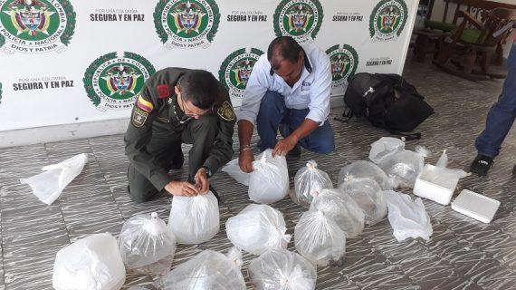 Decomisan 40 peces exóticos transportados en maletas