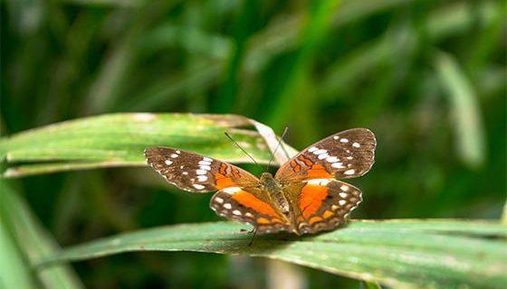 Docentes de la Autónoma apoyan la preservación ambiental