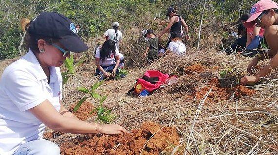 Cerro de La Campana cobra nueva vida con la siembra de 5.500 árboles