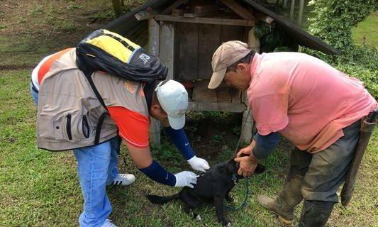 160 mil caninos y felinos serán vacunados este año por la Uesvalle