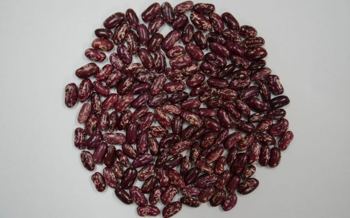 Lanzan primer fríjol voluble biofortificado, apto para sembrar en zona de cordillera