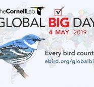 En el Valle del Cauca se avistaron 718 especies de aves en el Global Big Day 2019