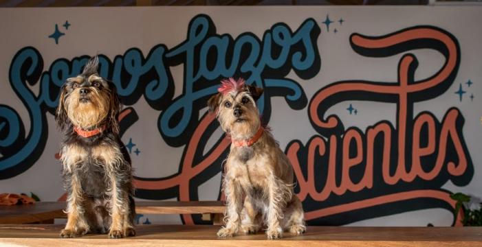 Fundación Instintos aporta al bienestar y mejora la calidad de vida a través de los perros