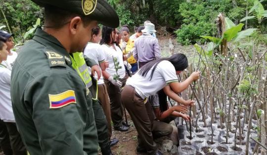 Material forestal es producido por estudiantes en Dagua