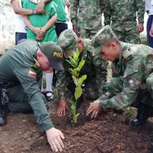 Mil nuevos árboles para Zarzal