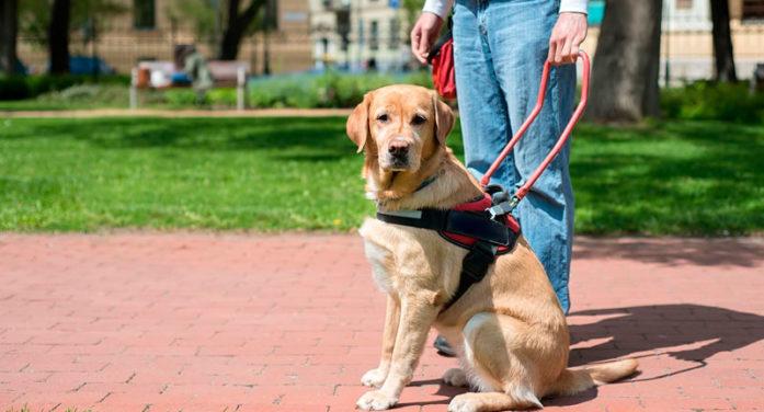 Icesi abre sus puertas a perros de asistencia