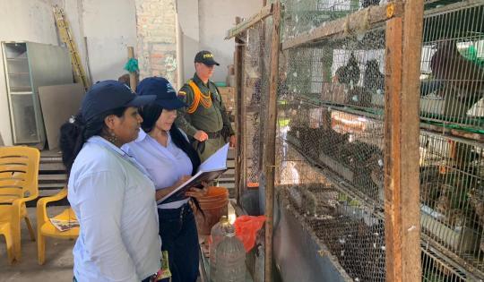CVC sigue trabajando para frenar la comercialización de fauna y flora silvestre