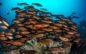 Realizaron primer taller virtual de atención de emergencias de fauna marina