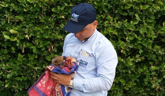 CVC rescató mono cariblanco y perro de monte