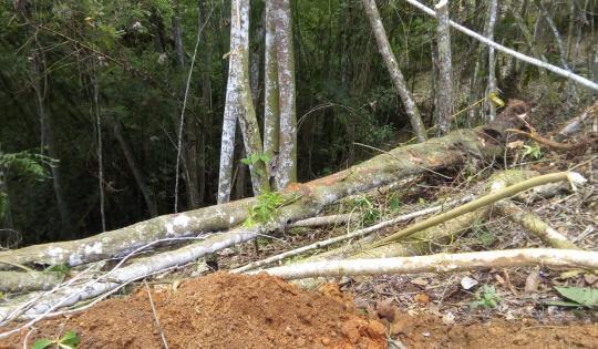 Fueron detenidas afectaciones ambientales en Dagua