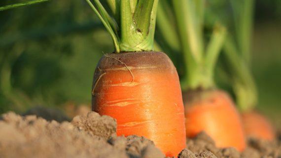 Una alianza para equilibrar el planeta en la tarea de alimentar
