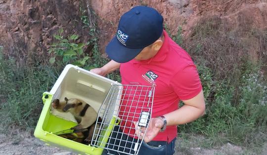 Liberan oso hormiguero en zona rural de Ansermanuevo