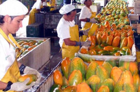 Gracias a la gestión de la Gobernadora, el Gobierno Nacional apoyará el Plan Integral Frutícola del Departamento