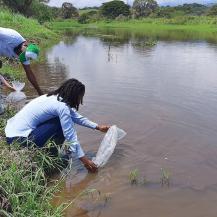 5.000 alevinos se sembraron en Jamundí