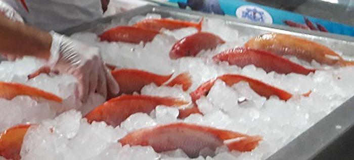 Secretaría de Salud hace recomendaciones al momento de adquirir alimentos en esta Semana Santa