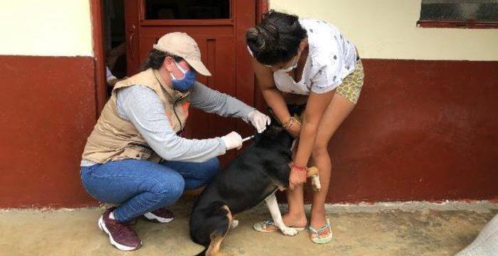 UESVALLE vacunará a cerca de 170 mil mascotas en el departamento