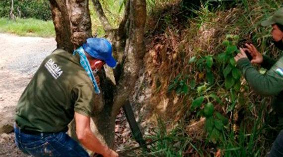 Crimen ambiental en ecoparque Cerro Tres Cruces-Bataclán