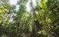 Colombia es el cuarto país amazónico con mayor pérdida de bosque en treinta años