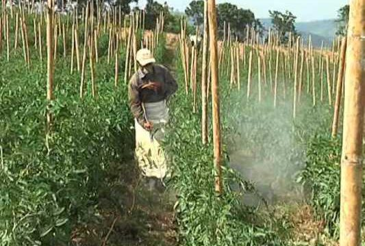 Gobernación busca busca 118 proyectos de seguridad alimentaria para apoyar su desarrollo
