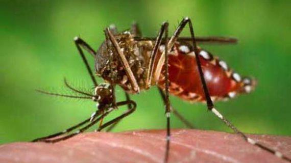 Valle del Cauca continúa en alerta por epidemia de dengue
